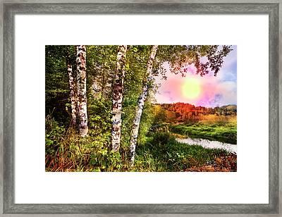 Country Birch Framed Print by Debra and Dave Vanderlaan