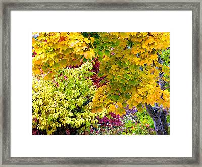 Country Color 15 Framed Print by Will Borden