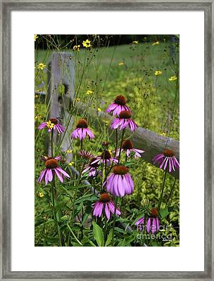 Country Coneflowers Framed Print