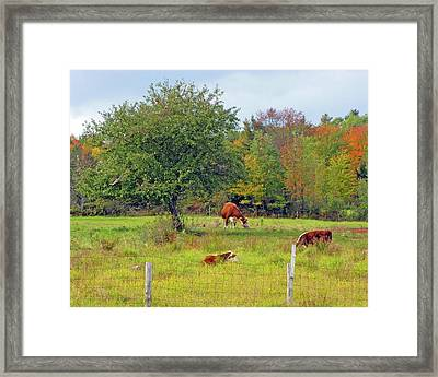 Country Dream Framed Print by Lynda Lehmann
