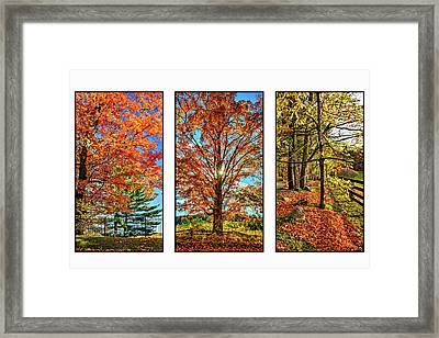 Country Fences Triptych Framed Print by Steve Harrington