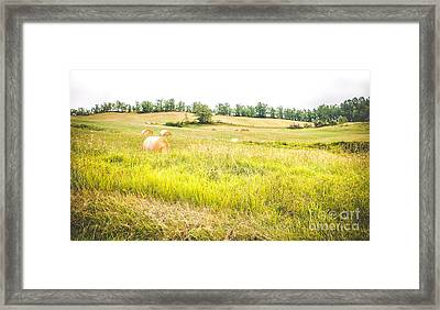 Country Landscape With Haystacks And Tall Grass Trampled - Panoramic Format Framed Print by Luca Lorenzelli