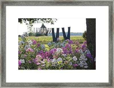 Country Laundry Framed Print by Lauri Novak