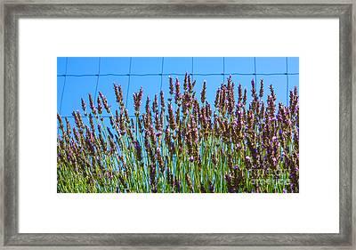 Country Lavender IIi Framed Print by Shari Warren