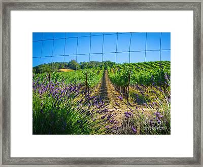 Country Lavender V Framed Print by Shari Warren
