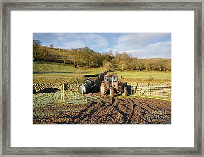 Country Life Framed Print by Nichola Denny
