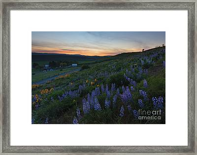 Country Meadow Sunset Framed Print