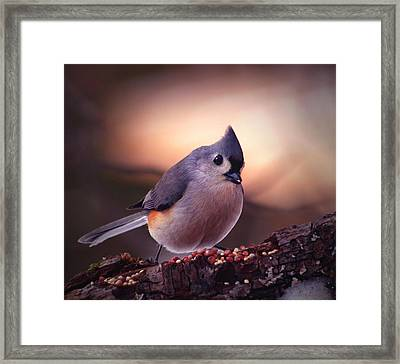 Country Mouse... Framed Print