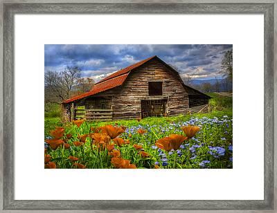 Country Poppies Framed Print