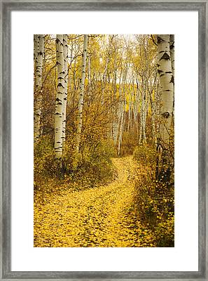 Country Road And Aspens 1 Framed Print