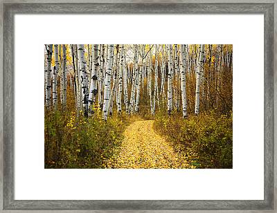 Country Road And Aspens 2 Framed Print