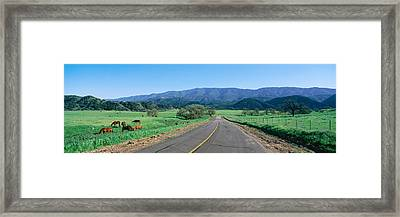 Country Road, California Framed Print by Panoramic Images
