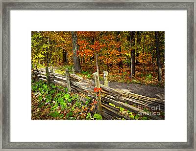 Country Road In Autumn Forest Framed Print