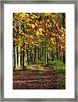 Country Road Framed Print by Svetlana Sewell