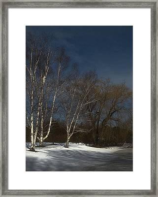 Country Roadside Birch Framed Print
