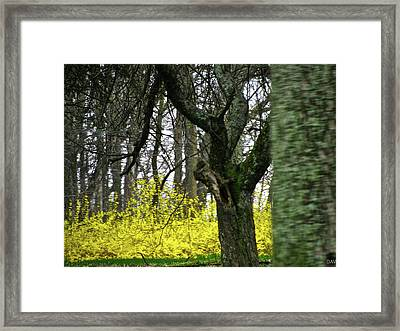 Country Spring Forest Framed Print by Debra     Vatalaro