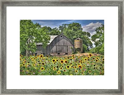 Country Sunflowers Framed Print by Lori Deiter