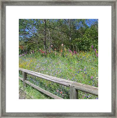 Country Wildflowers Framed Print