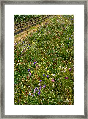 Country Wildflowers I   Framed Print by Shari Warren