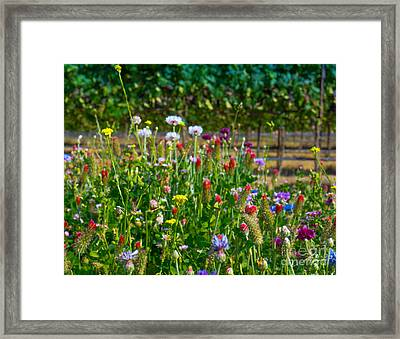 Country Wildflowers II Framed Print by Shari Warren