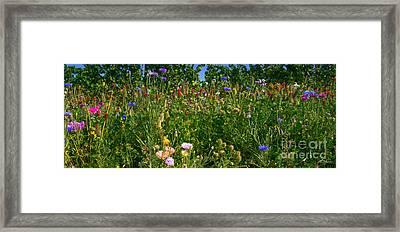 Country Wildflowers IIi Framed Print by Shari Warren
