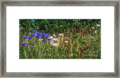 Country Wildflowers Iv Framed Print by Shari Warren