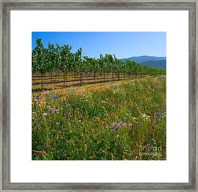 Country Wildflowers V Framed Print by Shari Warren