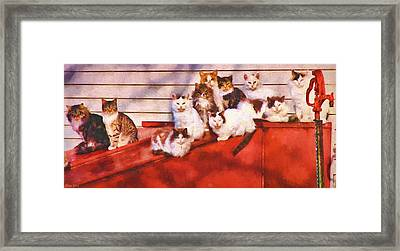 Countryside Cats Framed Print