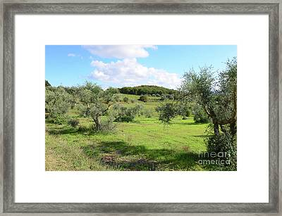 Countryside In Tuscany Italy In The Province Of Siena Framed Print by DejaVu Designs