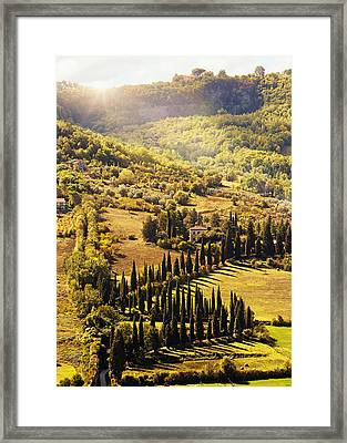 Countryside In Tuscany Italy With Cyprus Trees Framed Print