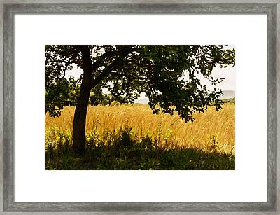 Countryside Of Italy  Framed Print by Andrea Mazzocchetti