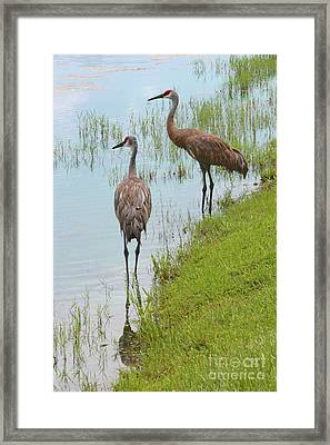 Couple Of Sandhills By Pond Framed Print by Carol Groenen