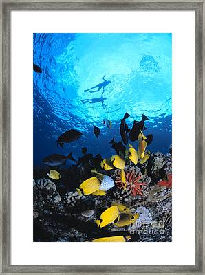 Couple Snorkels At Surfac Framed Print by Ed Robinson - Printscapes