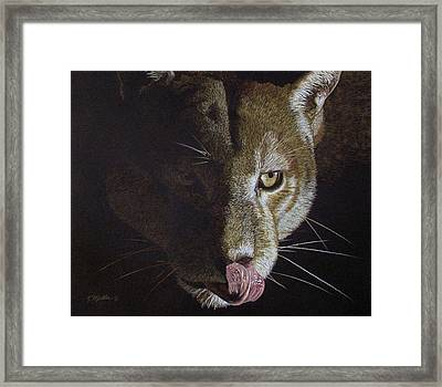Cougar Night Framed Print