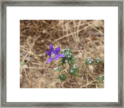 Framed Print featuring the photograph Cousins by Marie Neder