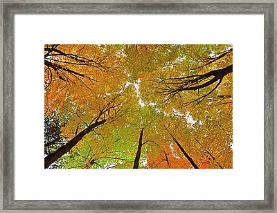 Framed Print featuring the photograph Cover Up by Tony Beck
