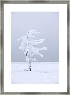 Covered In Frost Framed Print by Tim Grams