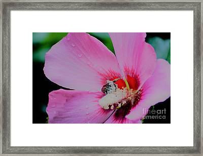Covered In Pollen Framed Print