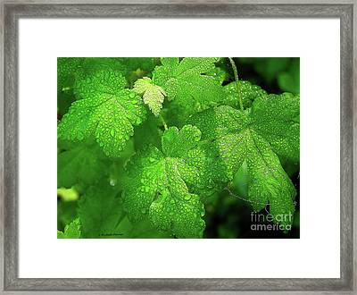 Covered In Rain Drops Framed Print