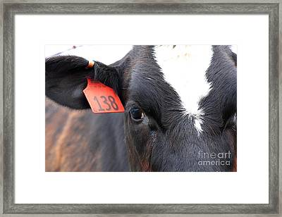 Cow 138 Framed Print by Wingsdomain Art and Photography