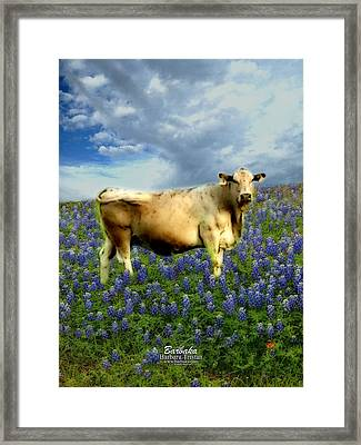 Framed Print featuring the photograph Cow And Bluebonnets by Barbara Tristan