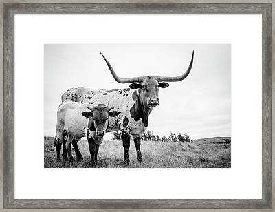 Cow And Calf In The Pasture Framed Print