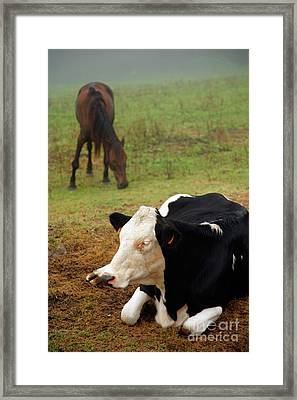 Cow And Horse Framed Print by Gaspar Avila