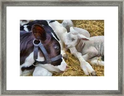 Cow And Lambs Framed Print