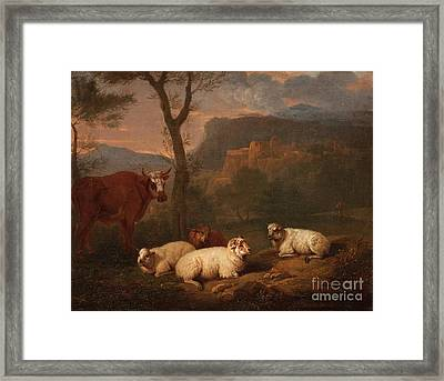 Cow And Sheep Resting Framed Print by MotionAge Designs