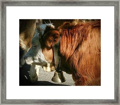 Cow Beautiful - Framed Print