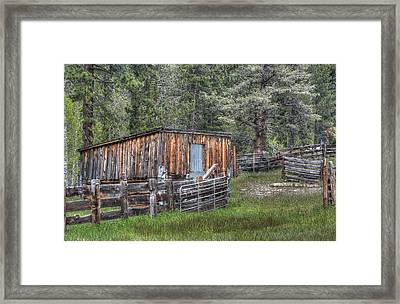 Cow Camp Framed Print