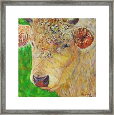Cute And Curly Cow Framed Print
