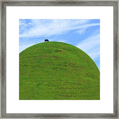 Cow Eating On Round Top Hill Framed Print by Mike McGlothlen