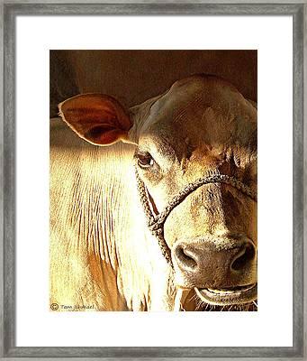 Cow Face Framed Print by Tammy Ishmael - Eizman